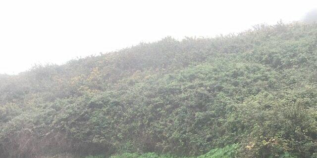 La Corona (C. Lance)